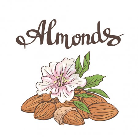 Almonds with kernels and flower