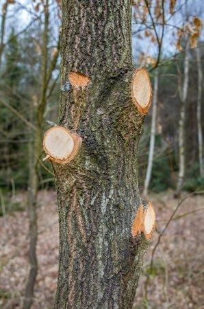 Photo pour L'arbre avec quelques branches coupées au large - image libre de droit
