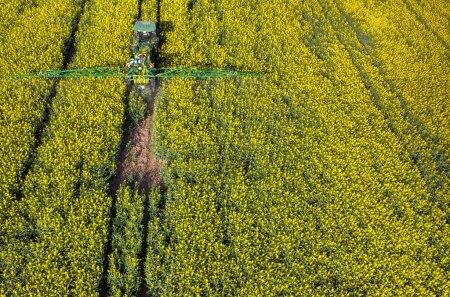 Photo pour Vue aérienne sur le tracteur pulvérisant les produits chimiques sur le champ de colza - image libre de droit