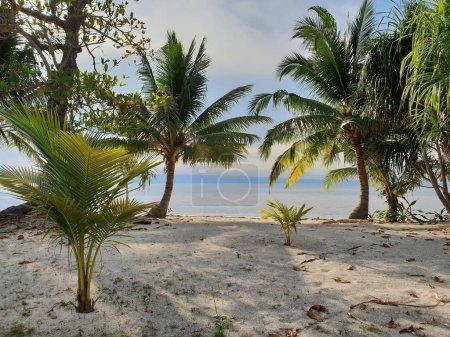 Photo for Palm Trees on the Beach. Sea View Paradise. - Royalty Free Image