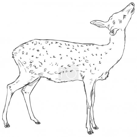 Sketch Dappled Deer