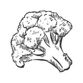Single Sketch Cauliflower
