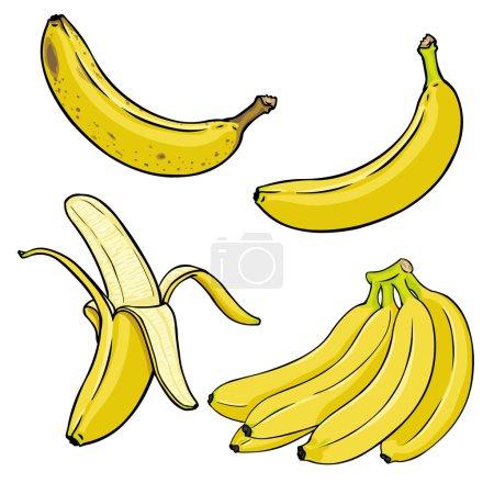 Illustration for Vector Set of Cartoon Yellow Bananas. Overripe Banana, Single Banana , Peeled Banana, Bunch of Bananas. - Royalty Free Image