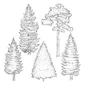 Vector Set of Sketch Pine Trees isolated on white background