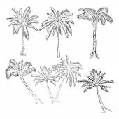 Set of Sketch Palm Trees