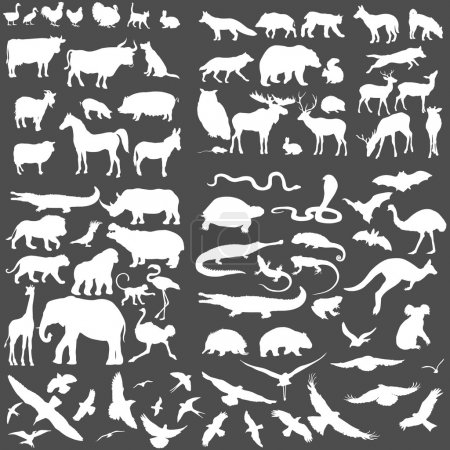 Illustration for Vector Big Set of Animals Silhouettes. Mammals, Reptiles, Amphibia, Birds, Bats and other. - Royalty Free Image