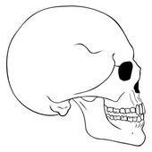 Line Art Side View Skull