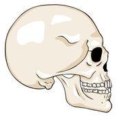 Cartoon Side View Skull