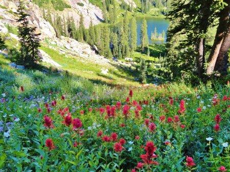 Sunrise beauty, wildflowers and lake