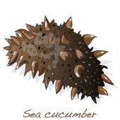Sea cucumber isolated
