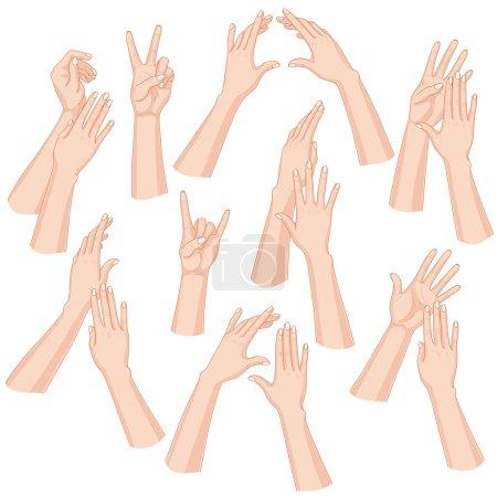 Illustration pour Ensemble de mains de femme isolées sur fond blanc . - image libre de droit