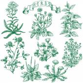 The set of medicinal plants Hand drawn sketch of clover yarrow stinging nettle ribwort oxalis calendula chamomile dandelion and banner with inscription -  herbs