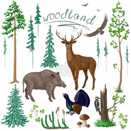Woodland Plants and Animals Set