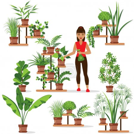 Caring for houseplants.