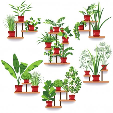 Illustration for The set of various of potted plants on the shelves and stands hanging on the wall. Apartment design. Idea for greening of the room. - Royalty Free Image
