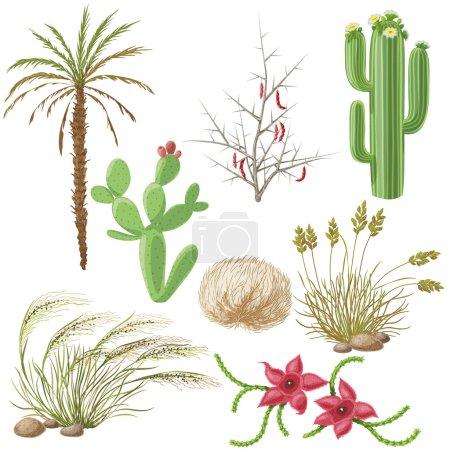 Illustration pour L'ensemble des plantes de steppe et du désert isolé sur blanc . - image libre de droit