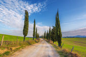 Gravel road with green cypress trees in spring Tuscany.