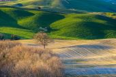 Fantastic landscape of early spring in Tuscany.