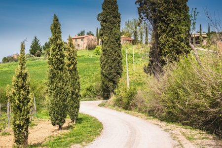 Dirty road with cypresses
