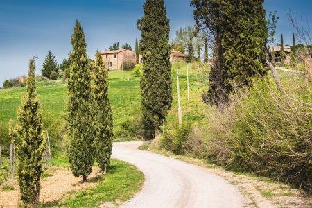 Schmutzige Straße mit Zypressen