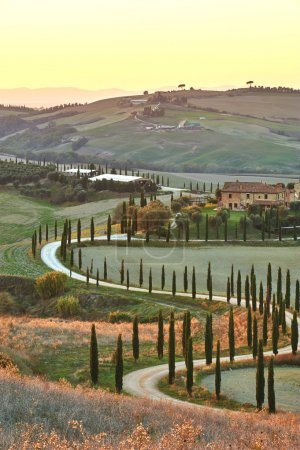 Cyprès de Toscane dans les magnifiques paysages du soleil couchant
