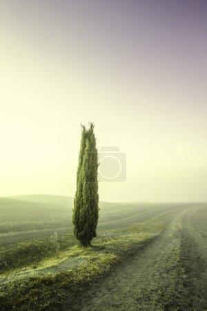 Photo pour Cyprès toscan sur les champs dans une lumière fantastique du soleil levant . - image libre de droit