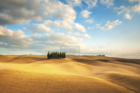 Autumn colors on the fields with Cypresses