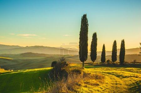 Cyprès à la lumière au coucher du soleil de réglage sur les champs de toscanes