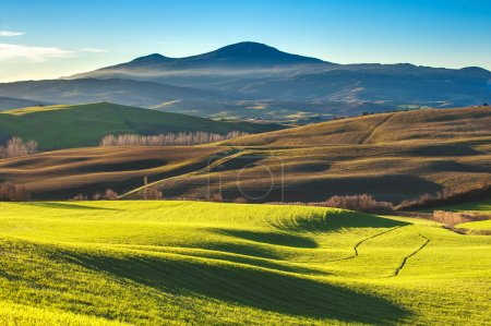 Tuscan colorful fields in the light of the setting sun