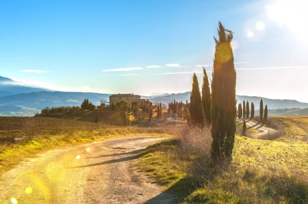 Cyprès en route vers une ferme dans le paysage toscan