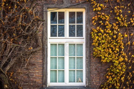 Autumn window in a Gothic building as background
