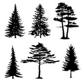 coniferous trees silhouettes collectio
