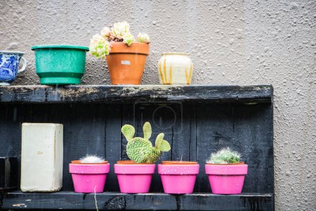 Cactus in pink pot against rust stained wall