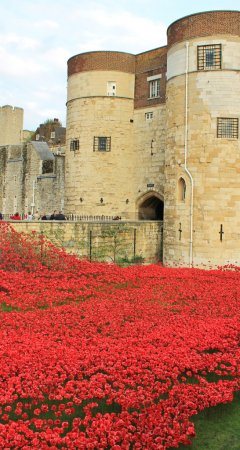 Blood Swept Lands and Seas of Red Poppies at Tower of London