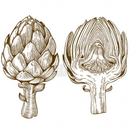 Engraving illustration of green vegetables artichoke