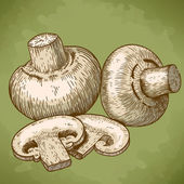 Engraving vector illustration of champignons in retro style