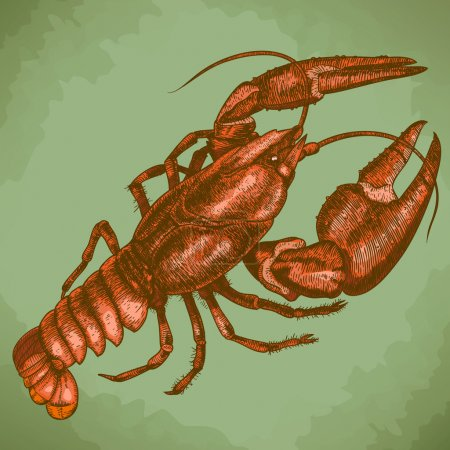 Engraving woodcut illustration of crayfish