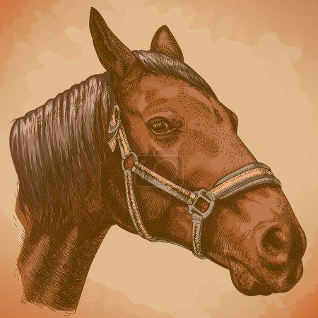 engraving illustration of horse head tn retro style