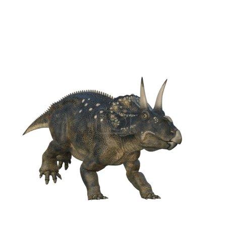 Nedoceratops dinosaur, originally know as Dicerato...
