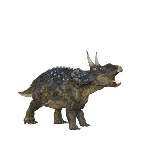 Roaring Nedoceratops dinosaur, originally know as ...