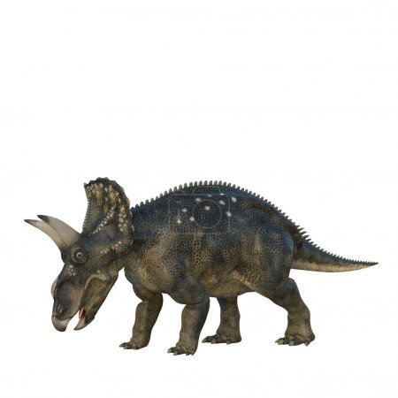 Grazing Nedoceratops dinosaur, originally know as ...