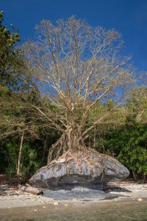 Big tree growing against stones and symbolizes struggle