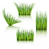 Fragments of the green grass isolated on white