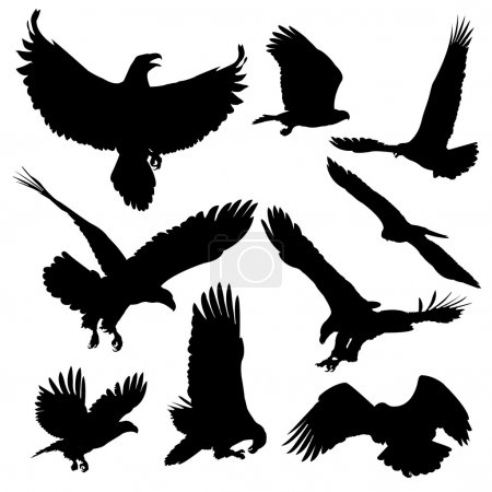 Bald eagles silhouettes isolated on white background.