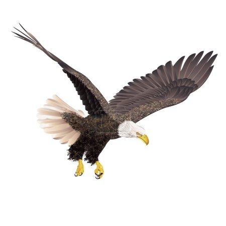 Illustration for Bald eagle isolated on white background. Vector illustration. - Royalty Free Image