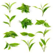 зеленого чаю листя ізольовані на білому тлі