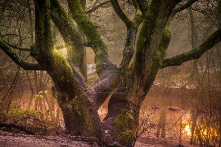 Photo pour Le Sankey Valley Park est un parc rural situé à Warrington. Le parc linéaire suit une section du canal St Helens et du ruisseau Sankey. Un sentier pédestre goudronné traverse le parc et est populaire auprès des cyclistes, des coureurs et des promeneurs de chiens. - image libre de droit