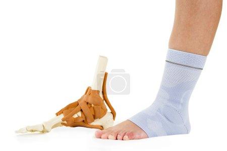 Human Foot in Ankle Brace and Skeletal Model
