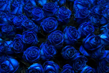 Photo for Big bunch of multiple blue roses. (Could be used as a texture background) - Royalty Free Image