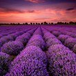 Stunning landscape with lavender field at sunset...